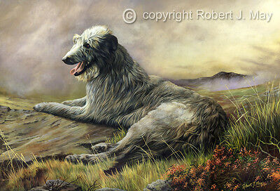 Scottish Deerhound Limited Edition Giclee Print