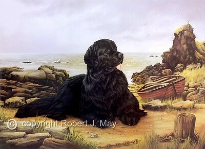Newfoundland limited edition dog print by Robert J. May