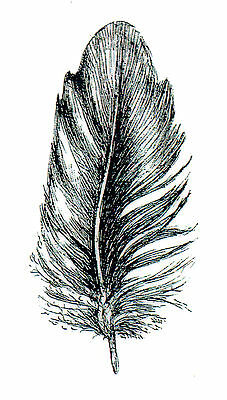 Feather Deep Red Cling Rubber Stamp