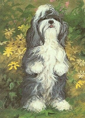 Illustrated Breeds Note Cards (blank) NOS Shih Tzu by Elizabeth Halstead