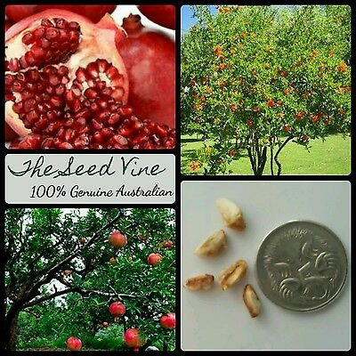 10+ POMEGRANATE TREE SEEDS (Punica granatum) Super Fruit Edible Decoration Sweet