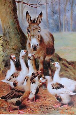 Farm Friends by William Weekes Donkeys Geese  Animals 8x10 Print Picture 1546