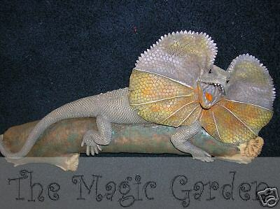 Hanging frilled neck lizard cement plaster craft ornament latex moulds molds