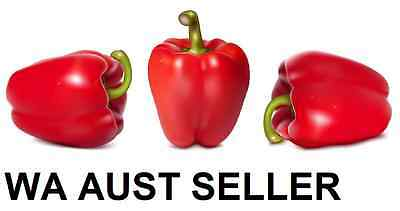 CAPSICUM 'Californian Red' 50+ seeds Green Yellow peppers