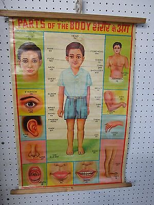 Vintage Indian Human Anatomy Chart ,Parts Of The  Body ,  Hindi/English