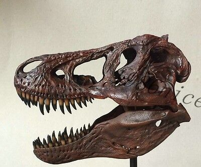 Newest 1/10 Tyrannosaurus Rex dinosaur Resin Fossil skull Model Collectibles !