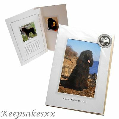 Irish Water Spaniel DOG pup GREETINGS CARD - 3 fold & Blank from Otter House UK