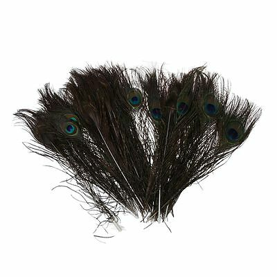 50pcs Natural Peacock Tail Feathers (Big Eyed) about 26-30cm T1