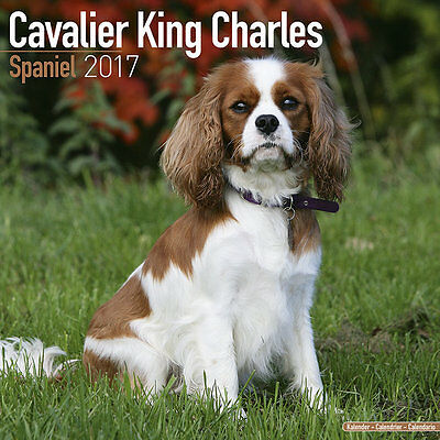 Calendrier 2017 - CAVALIER KING CHARLES
