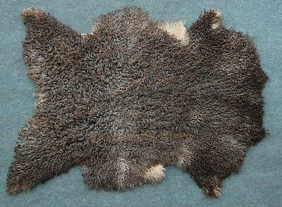 Gotland Sheepskin Lambswool Curly Hair like Tibet lamb very rare! Unique 22)