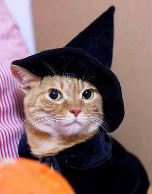 Pet Halloween Costume Hat + Cloak Witch Dog Cat Puppy Kitty