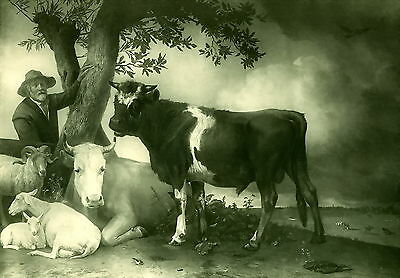 Original Antique PAUL POTTER Old Art Print YOUNG BULL 19th Farm Cow Sheep Cattle