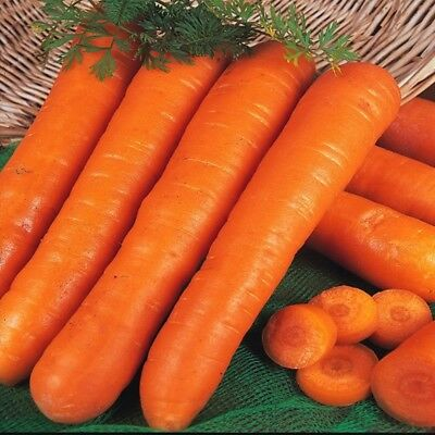 Carrot Early Nantes 2 - Appx 8000 seeds - 10 grams- vegetables