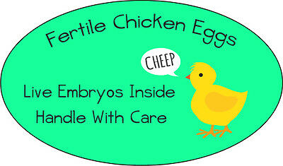 Fertile Chicken Eggs Glossy Egg Carton or Shipping Labels Set of 54