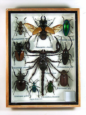 Real Butterfly Insect Bug Taxidermy Display Framed Box Small Set Gift FS gpasy 9