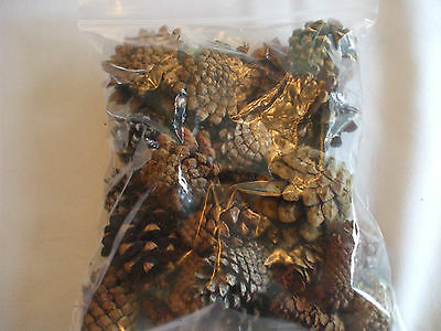 Pinecones MIXED Holidays Home Decoration Fragrant