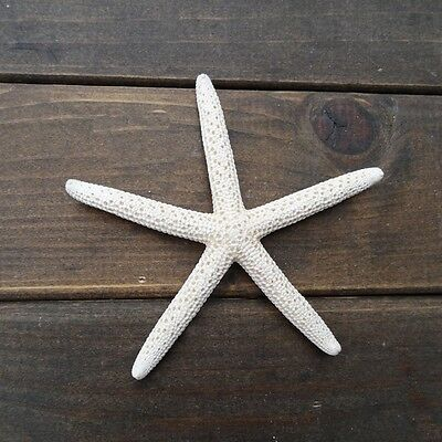 "12Pcs 2-4"" White Starfish Five Finger Beach Coastal Wedding Decor Pretty Crafts"