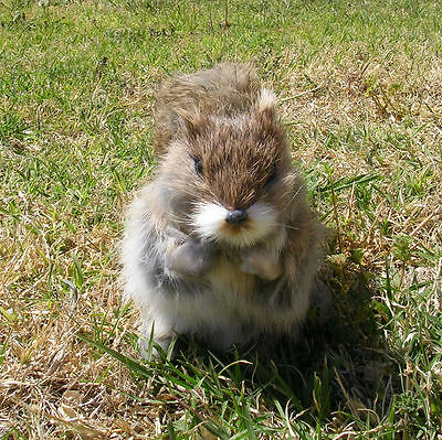Realistic Lifelike Squirrel GYBR Rabbit/Goat Fur Furry Animal SQ1956