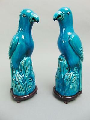 Pair of Chinese Blue Glaze Parrots 19th Century