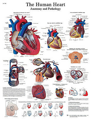 Anatomical Chart - heart, paper