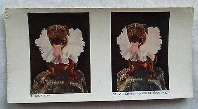 1925 Color American Bull Dog All Dressed Up Stereoview A C Co Stereoscope Card