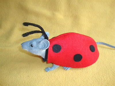 Ladybug Costume for Rat from R.A.T.S.