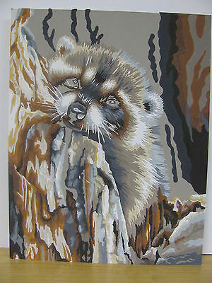 Almost Finished Paint by Number Daydreaming Raccoon 11x14 You Finish Wildlife