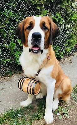 Personalized St. Bernard Dog Collar Oak Barrel 1 Liter Charm
