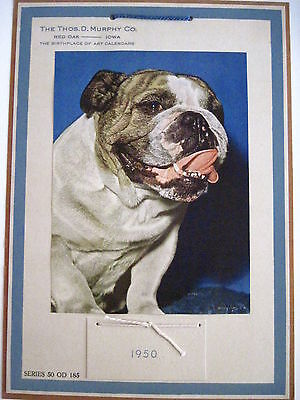 1950 Sample Advertising Calender w/ Picture of Bulldog *