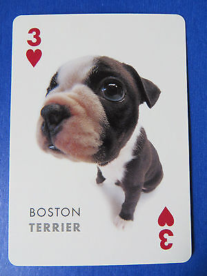 Boston Terrier Dog Puppy Luggage Tags Pair - Set Of 2 - Name Bag Trip Id