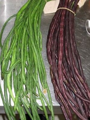 Authentic Green or Red Yard Bean (Chinese long pole,snake, asparagus bean) seeds