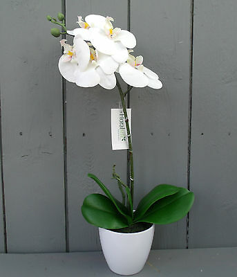 Artificial Ivory Potted Orchid  - 45cm Tall
