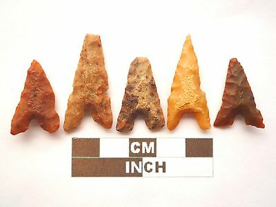 Neolithic Arrowheads x 5, Eiffel / Moroccan Points, Genuine - 4000BC  (Z034)
