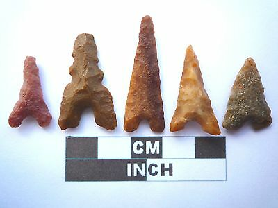 Neolithic Arrowheads x 5, Eiffel / Moroccan Points, Genuine - 4000BC  (T042)