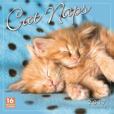 Cat Naps 2017 Square 16 Month Calendar by Sellers Publishing