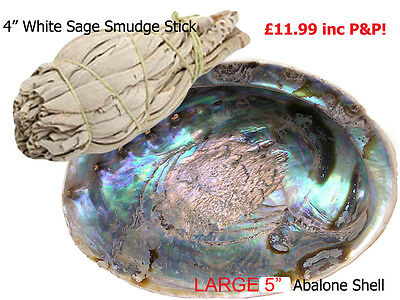 White Sage Californian Sage & Abalone Shell Combo Smudge Stick Kit, Shell, Sage