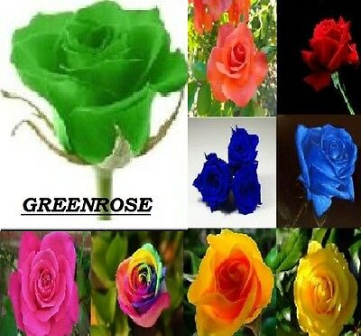 Home Garden rose seed  green Beautiful Plant Flower quality seeds