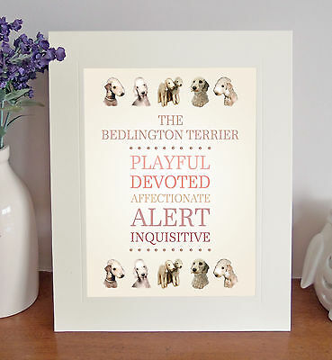 """Bedlington Terrier 10"""" x 8"""" Mounted Breed Traits Print Picture Fun Novelty Gift"""