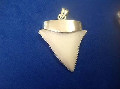 """1.6"""" GREAT WHITE SHARK TOOTH JEWELRY STERLING SILVER CAP MODERN Pendant capped"""