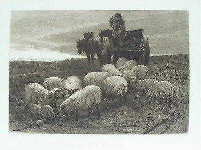 OLD ANTIQUE ETCHING EVENING SOUTH DOWNS SHEEP FARMER c1885 by DOUGLAS / MURRAY