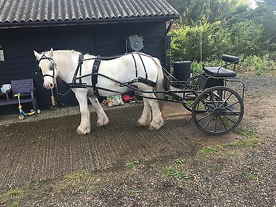 Ken Jackson Backstep Exercise Horse Drawn Cart Carriage To Fit Up To 13.2