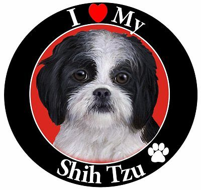 Shih Tzu, puppy cut black and white Car Magnet