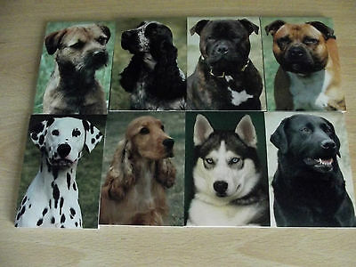 Dog Notepad * Different Breeds to Choose