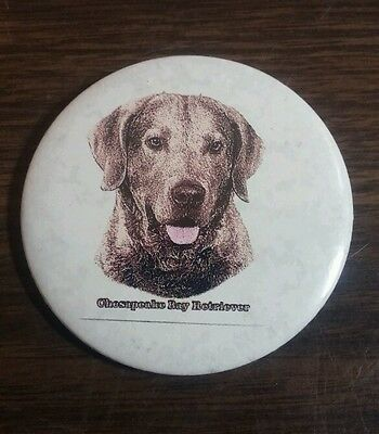 "Chesapeake Bay Retriever Button Pin Back 2 1/4"" NICE!"