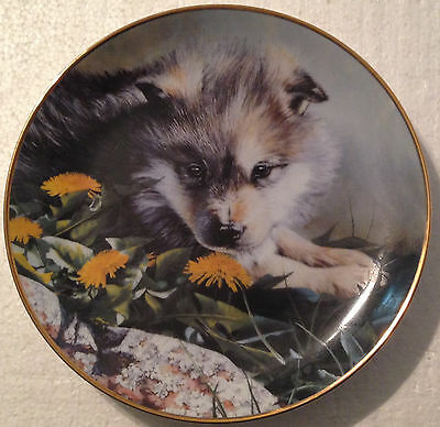 COLLECTABLE WOLF PLATE 8 1/4 INCHES -TOMORROWS PRIDE by LINDA DANIELS  - BRADEX