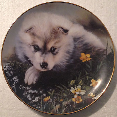 COLLECTABLE WOLF PLATE 8 1/4 INCHES - by LINDA DANIELS  NEW ADVENTURER- BRADEX