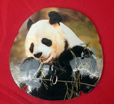 Large 5 inch Real Sand Dollar with Giant Panda Bear Bamboo