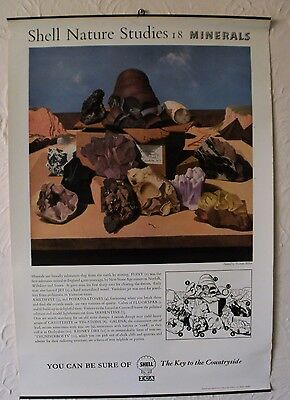 RARE Shell Nature Studies  Minerals Original Vintage 1950s Poster Educational