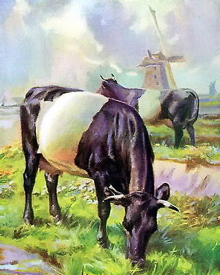 8x10 Print Farm Animals Black White Dutch Belted Cow Dairy Cattle Cows Windmill