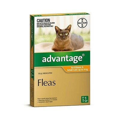Advantage Orange for Small Cats & Kittens up to 4kg 4 & 6 Packs